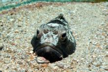 Fishface-10