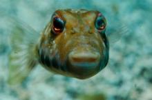 Fishface-1